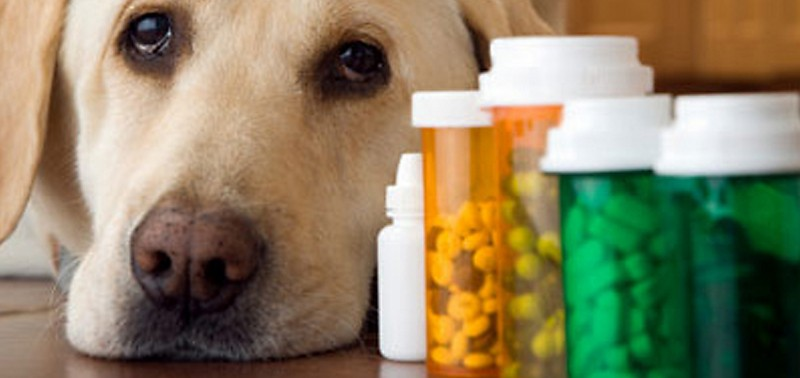 Do Your Pets Need Multivitamins?